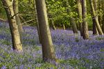Image: Kegworth in Spring