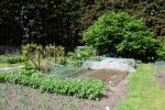 Image: Sideley Allotment